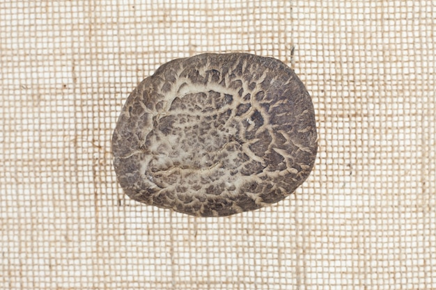 Shiitake-paddenstoel op zakachtergrond
