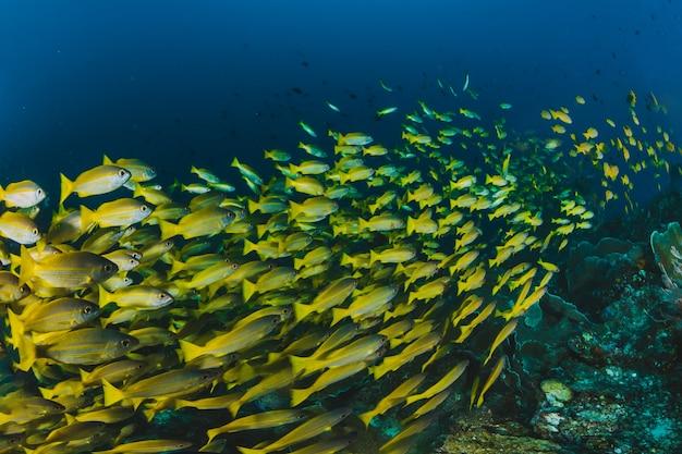 Shoal van tropische vis in de oceaan