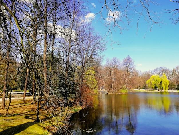 Shot van de bomen naast een vijver in het park van jelenia gora, polen