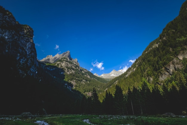 Shot van een bos met rotsachtige bergen ernaast