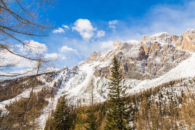 Shot van een langzame pas bedekt met sneeuw en sparren