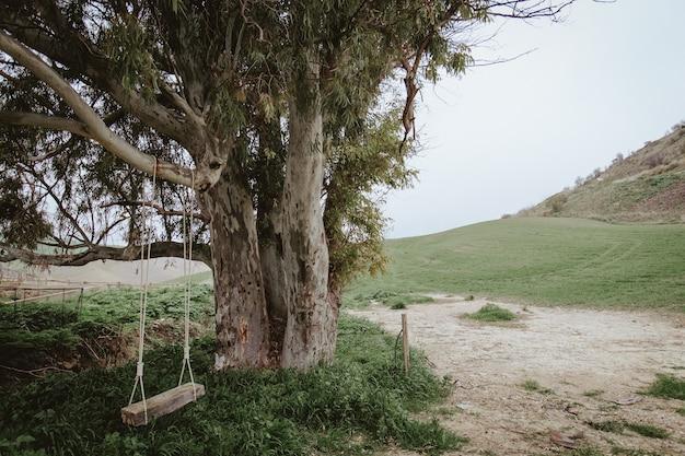 Shot van een oude boom en een lege schommel opgehangen in de natuur