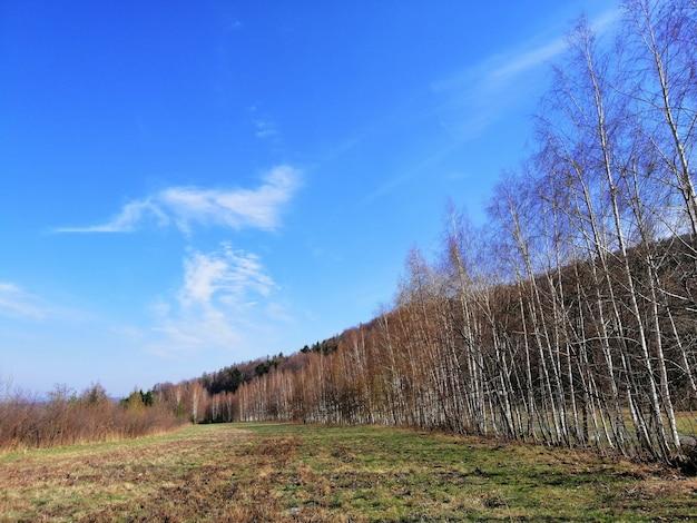 Shot van het bos en een met gras begroeide vallei in jelenia gora, polen.