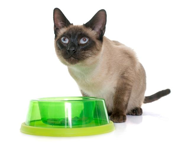 Siamese kat eten