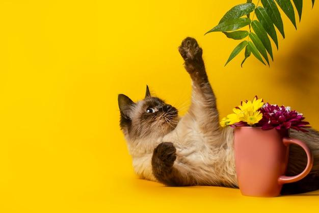 Siamese kat spelen met een plant op een gele ondergrond