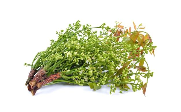 Siamese neemboom, nim, margosa, kinine op wit