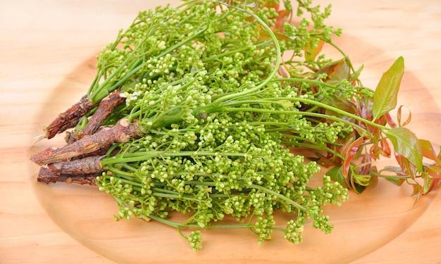 Siamese neemboom, nim, margosa, kinine