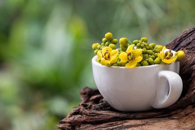 Siamese senna tak groene bladeren en bloemen op aard.