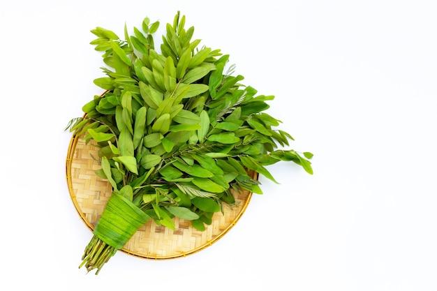 Siamese sennabladeren op witte achtergrond.