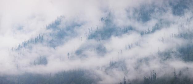 Siberische bergtaiga op een mistige ochtend