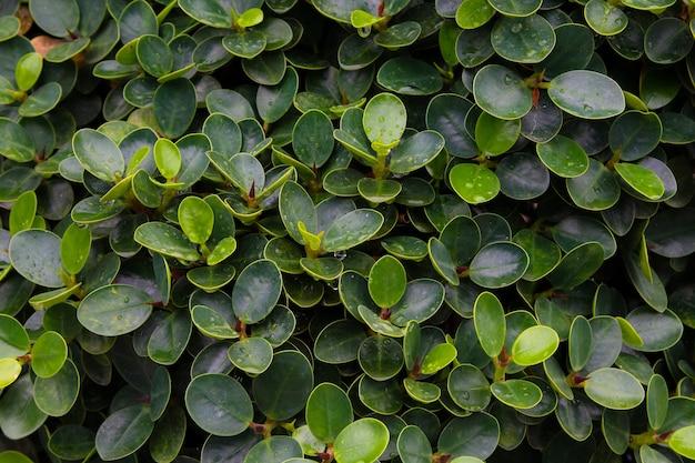 Sierklimplanten op omheining