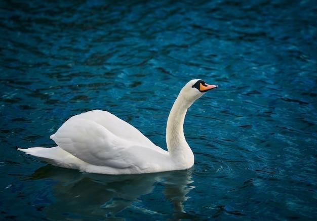 Sierlijke witte vogel op een water.