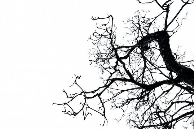 Silhouet dode boom die op witte achtergrond met exemplaarruimte wordt geïsoleerd