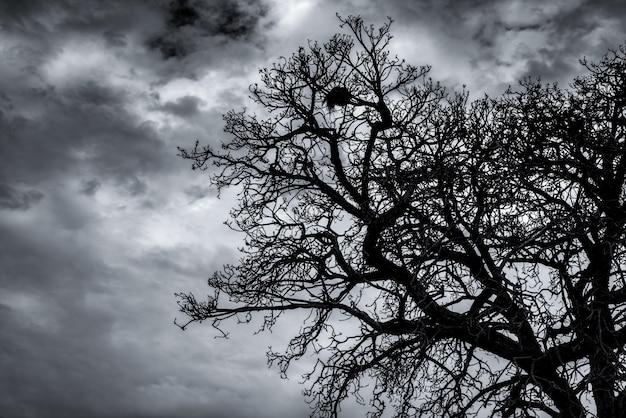 Silhouet dode boom en tak op donkere hemel en wolken