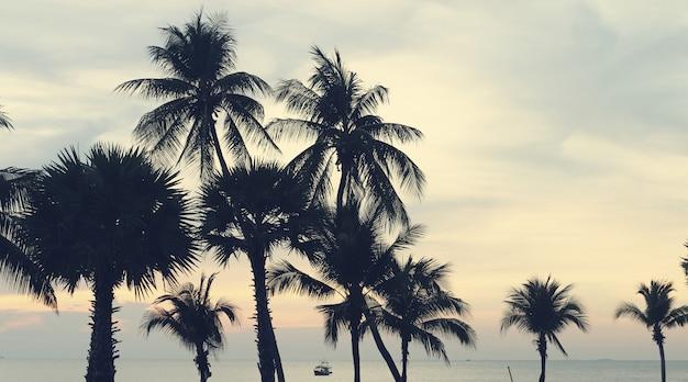 Silhouet kokos palmboom buitenshuis concept