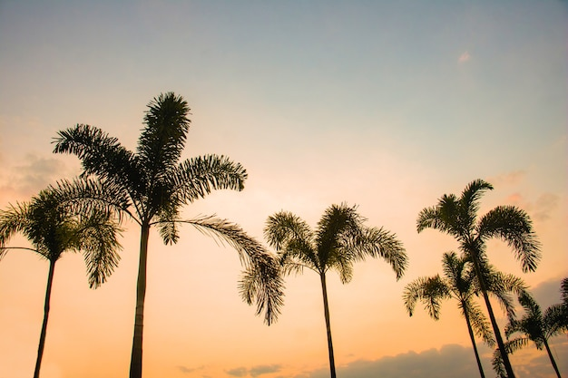 Silhouet kokospalmen.