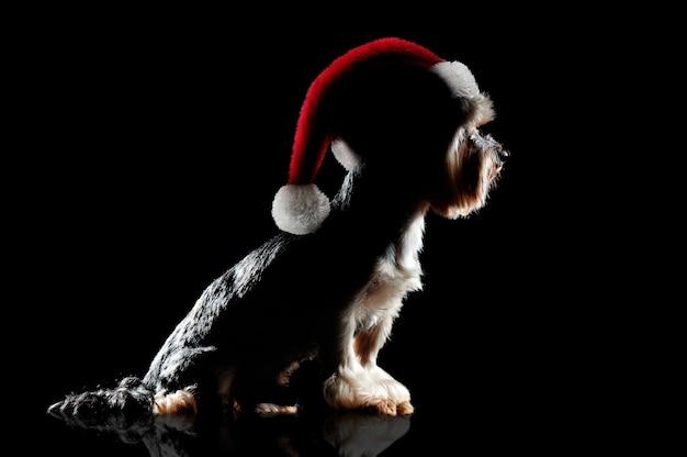 Silhouet op zwart van een yorkiehond die kerstmishoed draagt
