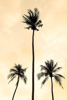 Silhouet palmboom op het strand en de zee rond mooi luxe zwembad in zonsondergang - vintage filter en boost up color processing