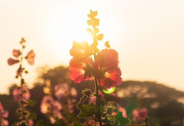Silhouet van bloemen en zonlicht in de zomer