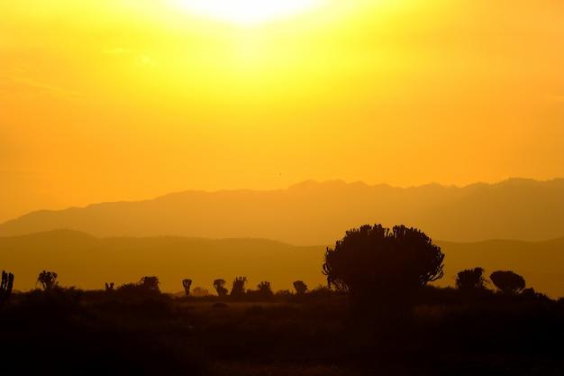 Silhouet van bomen en bergen met een oranje hemel