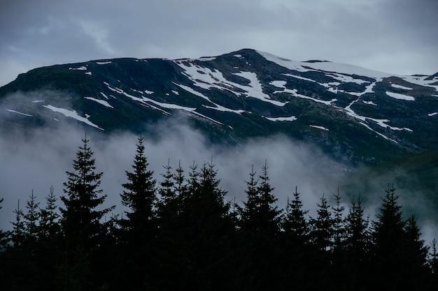 Silhouet van bomen met besneeuwde bergen