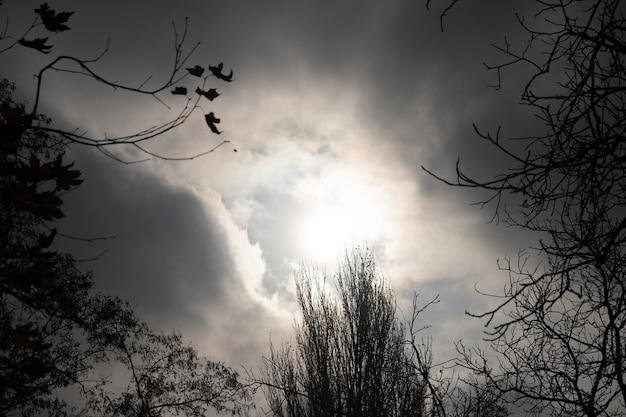 Silhouet van bomen met lucht op de achtergrond