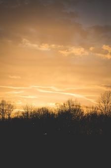 Silhouet van bomen onder een lichtgele hemel in een verticaal schot
