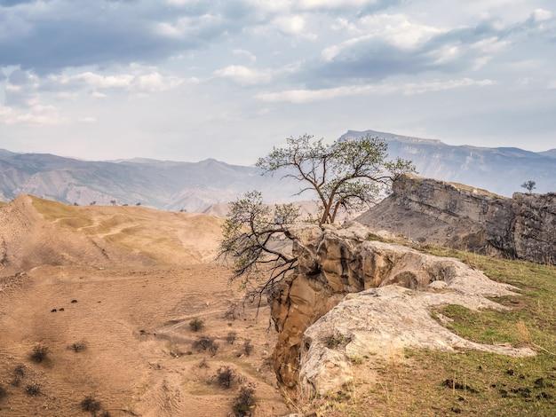 Silhouet van een boom aan de rand van een klif. de boom doemde op boven de afgrond.