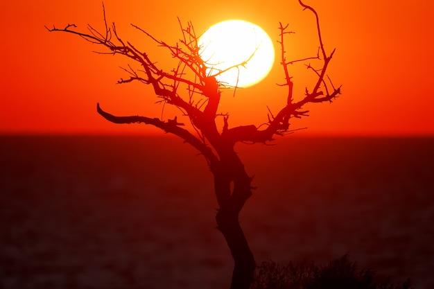 Silhouet van een boom en de weerspiegeling van het licht van de rijzende zon in de ramen van huizen bij zonsopgang op zee. een ongewone kijk op gewone dingen