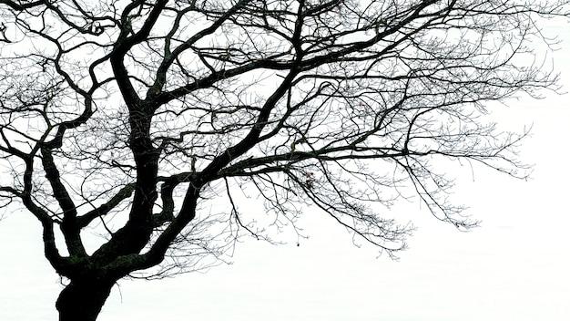Silhouet van een boom met kale takken op een lichte achtergrond