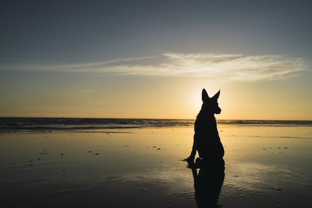 Silhouet van een grote hond zittend op de kustlijn en de zonsondergang over de zee