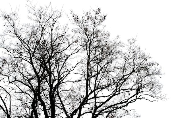 Silhouet van een kale boom op een achtergrond van lichte lucht