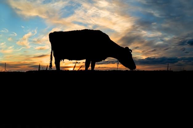 Silhouet van een koe tegen de blauwe hemel en avond zonsondergang