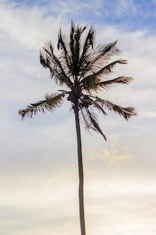 Silhouet van een kokospalm op ipanema beach.