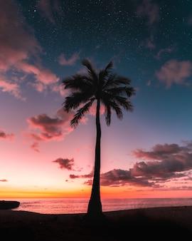 Silhouet van een palmboom onder een melkweghemel bij zonsondergang