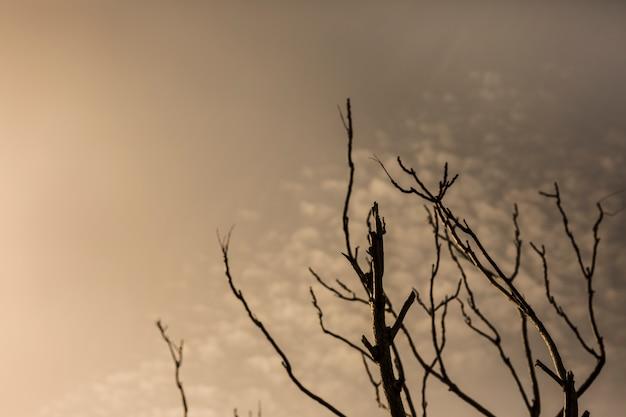 Silhouet van kale boom tegen dramatische hemel