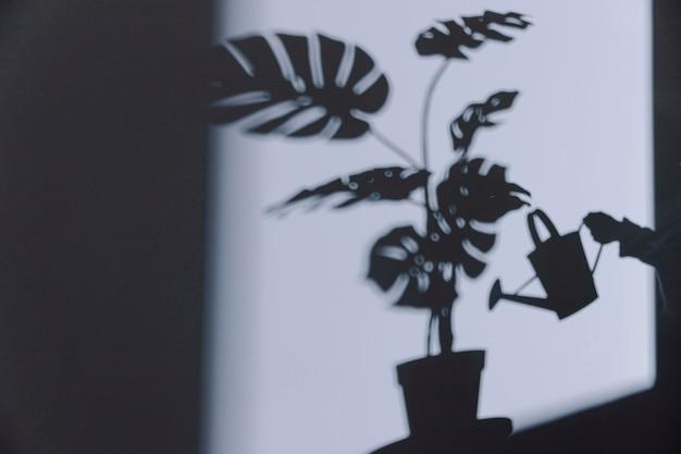 Silhouet van kamerplant op de muur