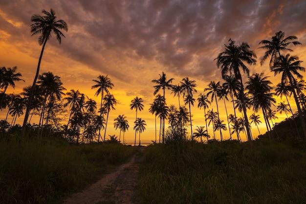 Silhouet van kokosnotenpalm bij zonsondergang op tropisch strand
