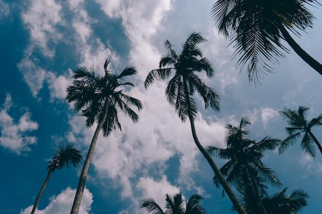 Silhouet van lange palmbomen tegen blauwe hemel
