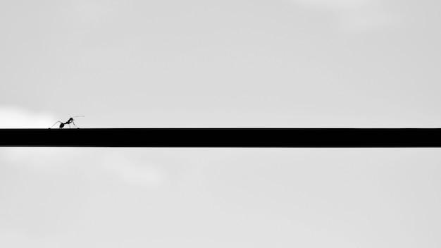 Silhouet van mier op een draad