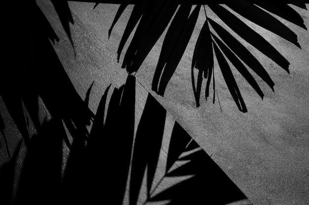 Silhouet van palmbladen en schaduw op een concrete zwart-wit muur