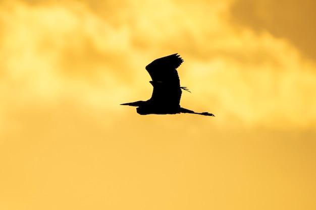Silhouet van reiger bij de rijstvelden bij zonsondergang in albufera de valencia