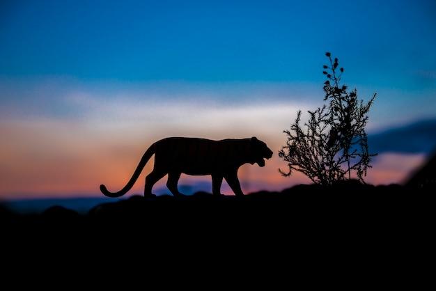 Silhouet van tijgerdier bij zonsondergangachtergrond.