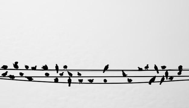 Silhouet van vogels die op een telefoonlijn zitten