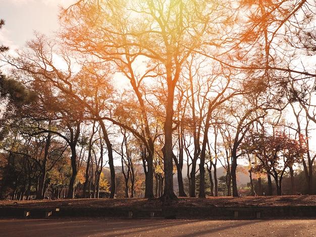 Silhouetbomen in het de herfstbos