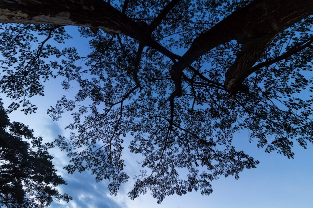 Silhouetboom bij nacht