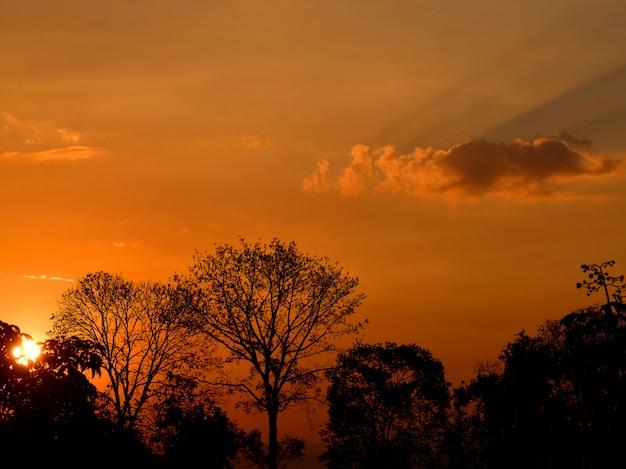 Silhouetboom in de ochtend