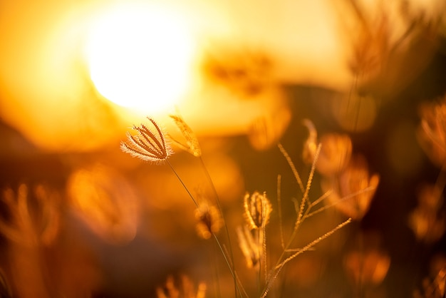 Silhouetgras op zomer van het zonsondergang de mooie landschap op zonsondergang.