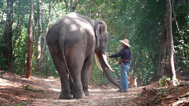 Silhouetolifant op de achtergrond van sunsetelephant thai in surin thailand