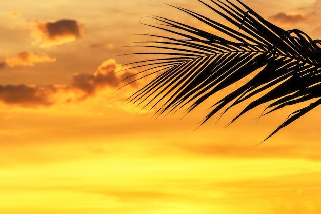 Silhouetpalmbladen op hemel neary overzees oceaanstrand in zonsondergang of zonsopgangtijd voor vrije tijdsreis en vakantieconcept